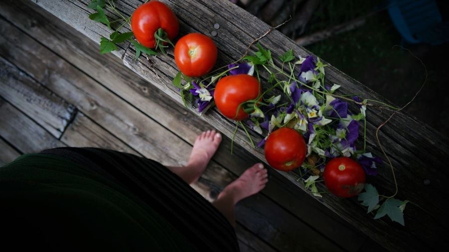 Harvesting Tomatoes Body Part Cherry Tomato Day Finger Food Food And Drink Freshness Fruit Hand Healthy Eating High Angle View Holding Human Body Part Human Hand Human Limb One Person Outdoors Red Ripe Tomato Vegetable Wellbeing Wood - Material