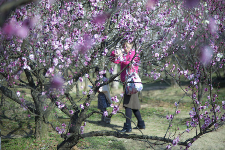Mother and daughter in Plum Forest Plant Tree Flower Flowering Plant Freshness Growth Beauty In Nature Nature Springtime Day Blossom Pink Color Outdoors Purple Mother And Daughter Plum Forest Fragility