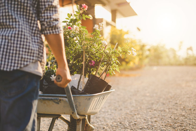 Midsection of person holding flowering plant in basket