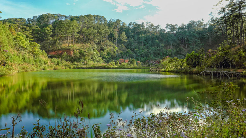 Reflection Lake Water Nature Beauty In Nature Tree Scenics Outdoors Day Tranquility Tranquil Scene No People Sky Growth Dalat - Vietnam Perspectives On Nature