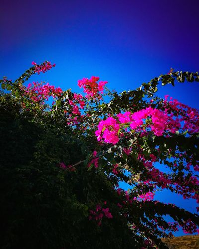 Beautiful flowers... Sky And Clouds Blue Sky Beautiful Nature Beauty In Nature Beautiful Green Color Green Freshness Fresh Grass Plants Flower Collection Plants And Flowers Beautiful Day Sunny Trees Front View Blackandwhite Black Purple Flower Tree Clear Sky Blue Multi Colored Sky Plant Lilac Plant Life Inflorescence