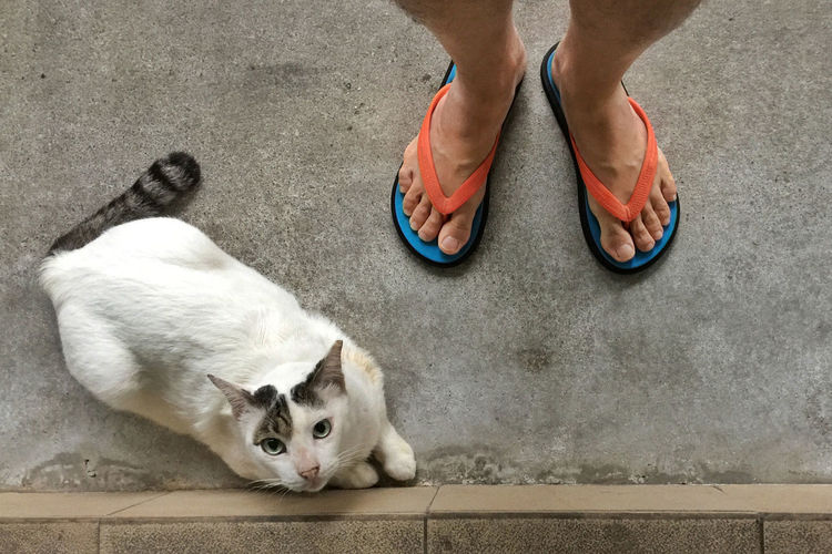 Low Section Of Man In Slipper Standing By Cat On Street