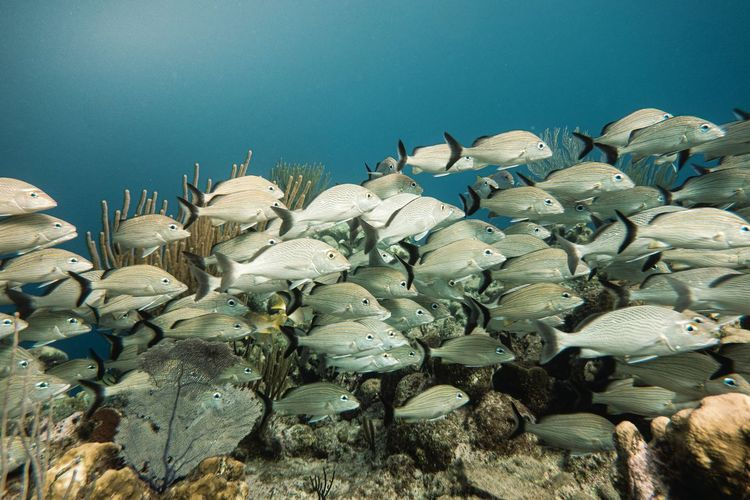 View of fishes in sea