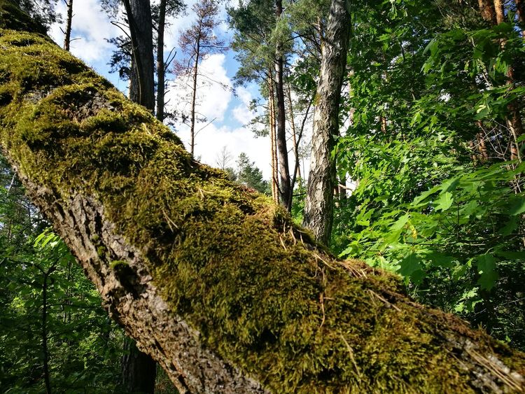 Tree Low Angle View Green Color Growth Nature Day Tree Trunk Outdoors Branch No People Sky Beauty In Nature Close-up