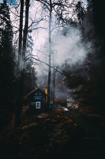 In The Wild In The Woods In The Forest Mood Captures Moody Cabin Environment Fog Tree Land Plant Forest Burning Smoke - Physical Structure No People Nature Growth Communication Outdoors WoodLand Built Structure Architecture EyeEm Best Shots EyeEm Nature Lover EyeEm Best Shots - Landscape