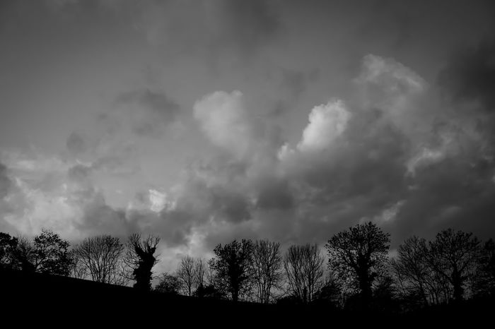 Silhouette Trees Trees Silhouettes Trees And Sky Clouds Sky And Clouds Beauty In Nature Sky Storm Cloud Nature Cloud - Sky Black & White Blackandwhite Black And White