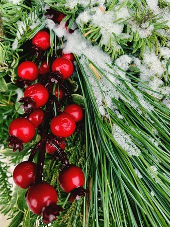 Red Tree Plant No People Christmas Green Color Freshness Nature Christmas Decoration Celebration High Angle View Decoration