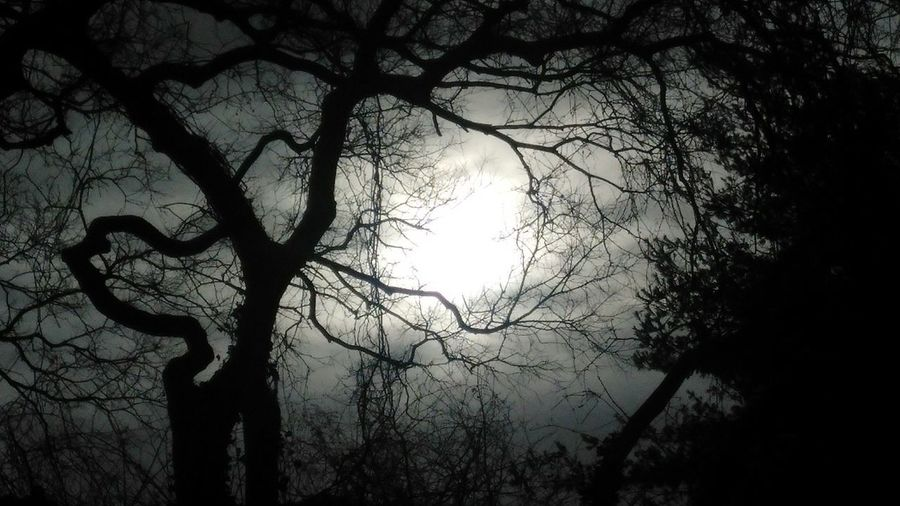 trees scape: atmosphere. photo by Shell Sheddy Streetphotography Street Documentary Photography Shellsheddyphotography Sheshephoto The Street Photographer - 2018 EyeEm Awards The Great Outdoors - 2018 EyeEm Awards Tree Branch Bare Tree Silhouette Astronomy Sky Treetop Sky Only Atmospheric Mood Dramatic Sky Long Shadow - Shadow Foggy