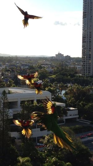 Enjoying Nature The Purist (no Edit, No Filter) Check This Out Birds In Flight