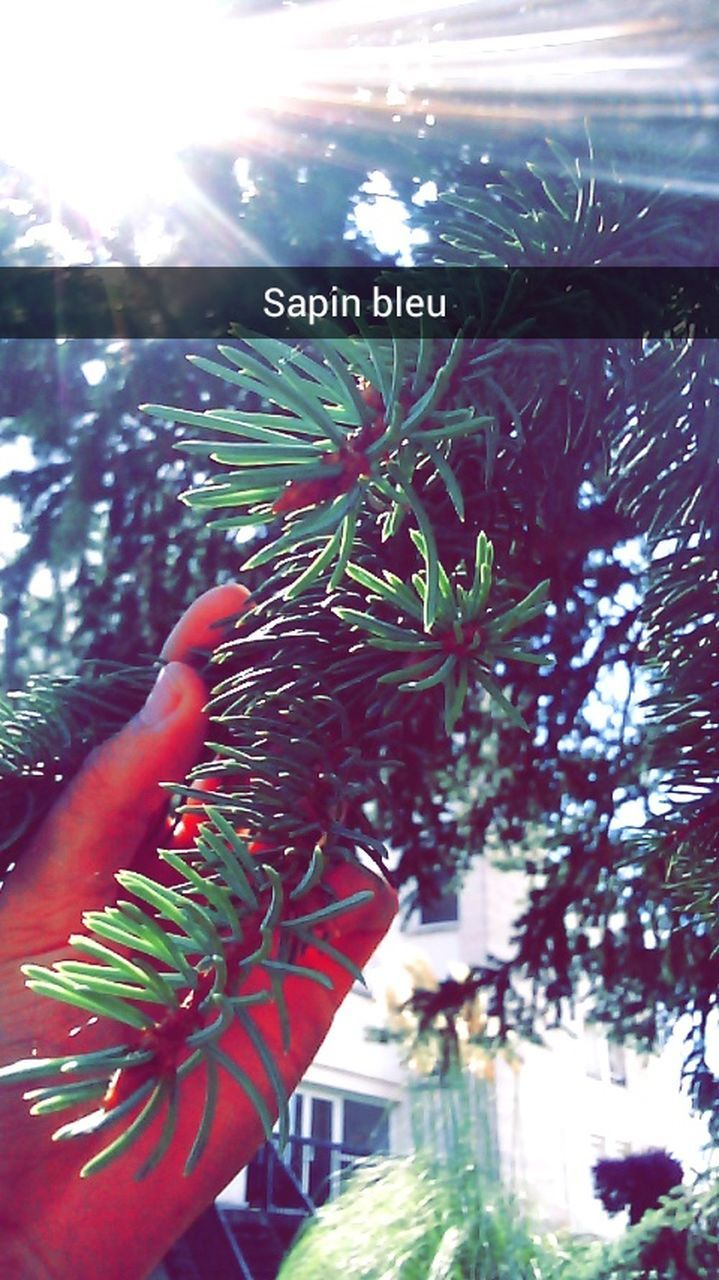 growth, plant, nature, human hand, tree, close-up, one person, day, outdoors, people