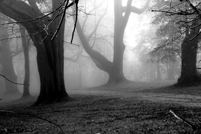 Bare Tree Black & White Bnw Bnw_collection Early Morning Eery Empty Fog Foggy Glowing Grief Landscape Mist Mystery Nature Photography Nature_collection Huffington Post Stories Non-urban Scene Outdoors Scenics Tranquil Scene Tranquility Tree Tree Trunk Weather Finding New Frontiers