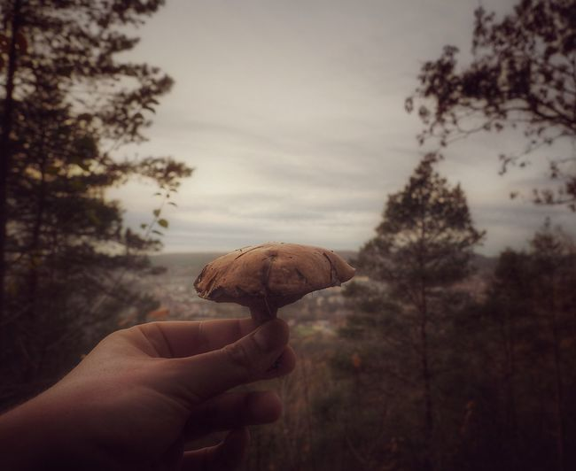 Close-up of hand holding mushroom
