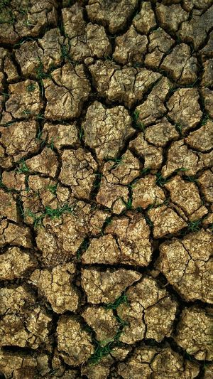 The drought. EyeEm Selects Details Perspective Top Perspective Top View Nature Withered  Cracks Cracks In The Ground Cracks In The Earth Backgrounds Full Frame Sunlight Textured  Pattern Shadow Cracked Close-up Arid Climate Drought Desert Soil Arid Young Plant Salt Basin Salt Lake Namib Desert Focus On Shadow