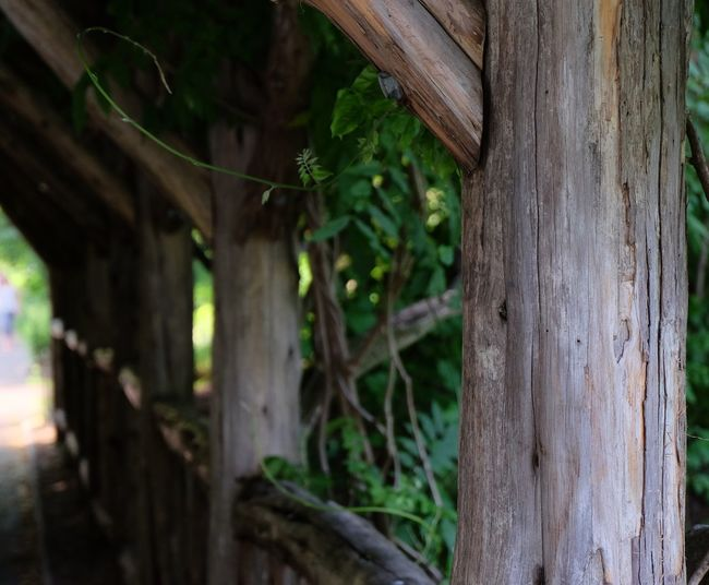 Wooden fence with trees in background