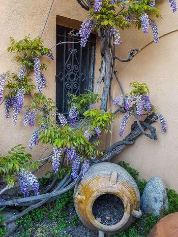Rincones de Primavera La Seu D'Urgell Flower Catalunya Alt Urgell Window Colorful Plant Detail Flower Arrangement Arkitecture_details Architecture Building Exterior Tree