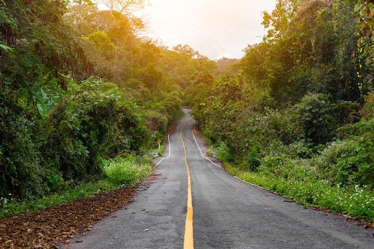 Empty road amidst trees