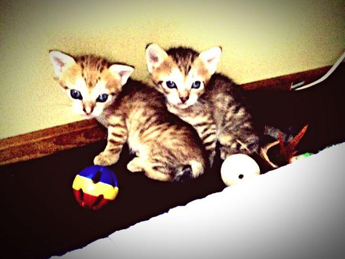 挨拶がわりに昔飼ってた猫さんのお子様達〜🐈🐈 お母様は虹の橋に旅行へいってますが、娘達は今でも元気ですよ〜 猫 仔猫 Cats ねこ にゃんこ First Eyeem Photo