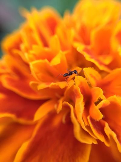 Flower Beauty In Nature Fragility Petal Nature Insect Flower Head Animals In The Wild Yellow Freshness No People Growth Animal Themes Close-up Outdoors Day Pollination