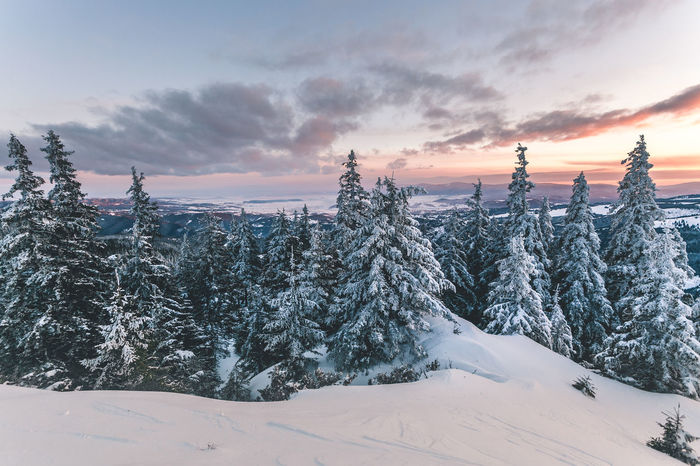 Beauty In Nature Cloud - Sky Cold Temperature Covering Environment Landscape Nature No People Non-urban Scene Plant Scenics - Nature Sky Snow Snowcapped Mountain Sunset Tranquil Scene Tranquility Tree White Color Winter