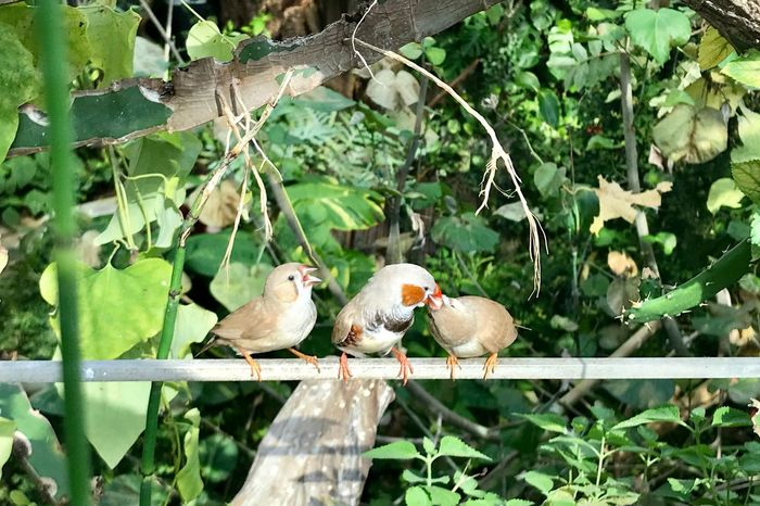 Feeding  Bird Vertebrate Animal Animal Wildlife Leaf Plant Animals In The Wild Tree Plant Part Animal Themes Group Of Animals Perching Green Color Day Branch Nature No People Growth Outdoors Beauty In Nature