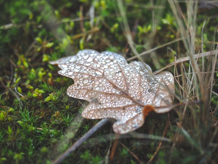 A leaf with dew on it Moss Seasons Pass Away Elapse Autumn colors Autumn🍁🍁🍁 Autumn Dew Drops Dew Leaf Land Plant Nature No People Day Close-up Grass Selective Focus Field Growth Outdoors Forest Water Beauty In Nature Focus On Foreground