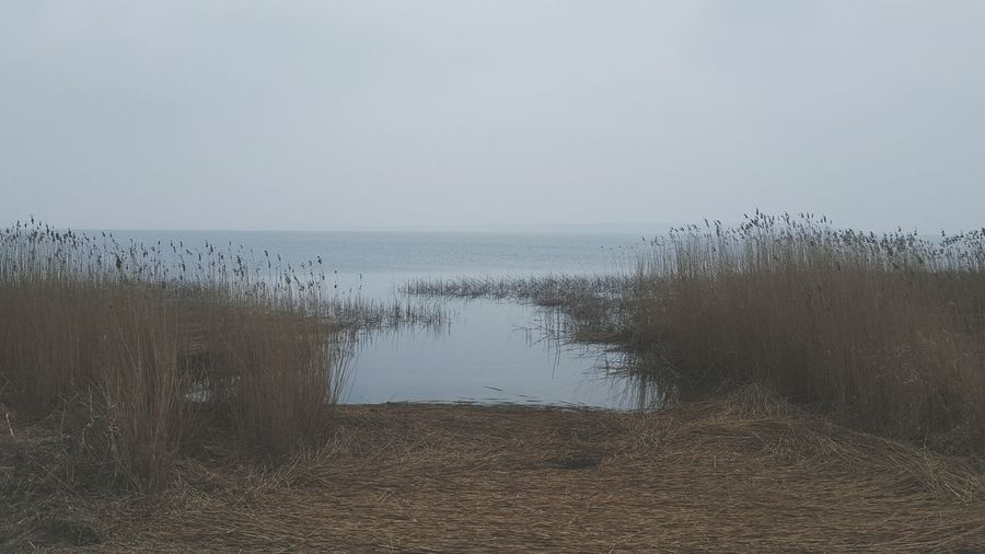 Baltic Sea Insel Usedom Usedom Rainy Days Schilf Water Water_collection Melancholy Melancholic Landscapes My Running View Grey Sky Grey Day
