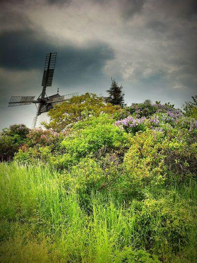 Landscape Summer Weinviertel