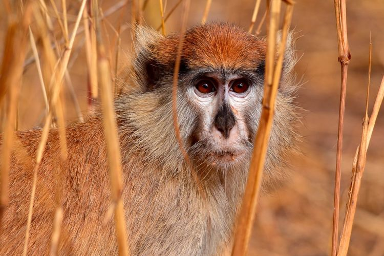 Close-up of monkey in grass