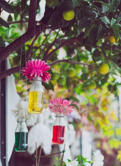 Flowers Cinque
