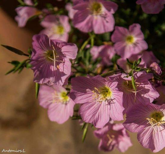 Flower Head Flower Pink Color Purple Petal Close-up Plant Sky