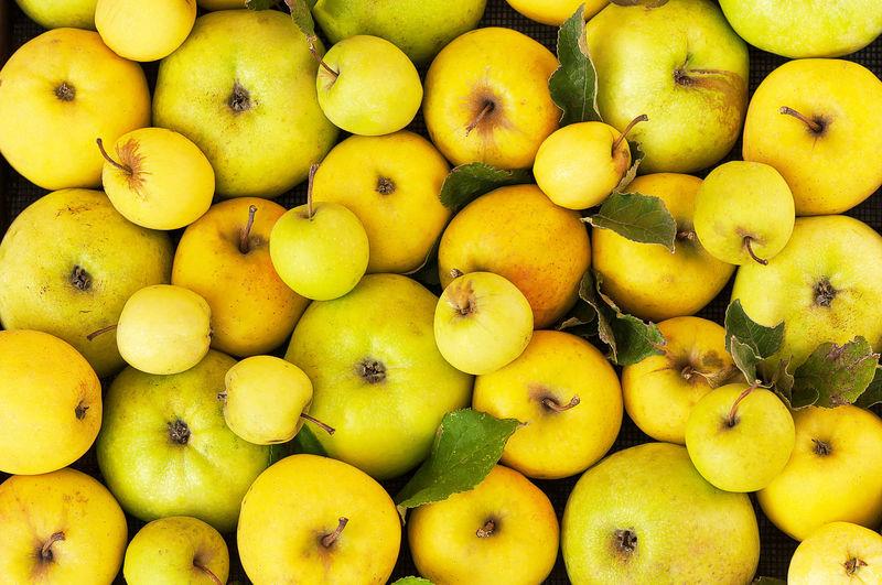 Fresh yellow,