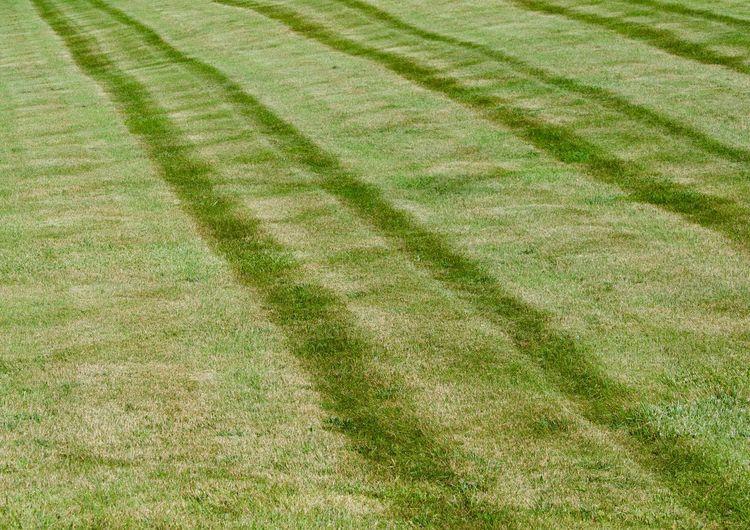 Full frame shot of grassy field