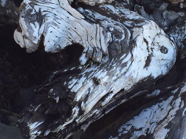 What do you see? I see a growling dog... Driftwood Nature Photography Beachphotography Oregon Coast Blackandwhite Woodporn Beachlife First Eyeem Photo