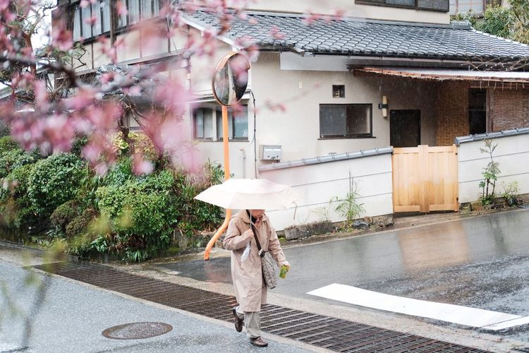 Japanese woman in Kyoto holding umbrella in rainy day during sakura cherry blossom season Nature Travel Japanese Citizen Calm Zen Street Photography Rain Old Woman Elderly Japanese  Japan Spring Pink Sakura Blossom Cherry Blossom Sakura Japanese  Japan Umbrella Kyoto Adventures In The City