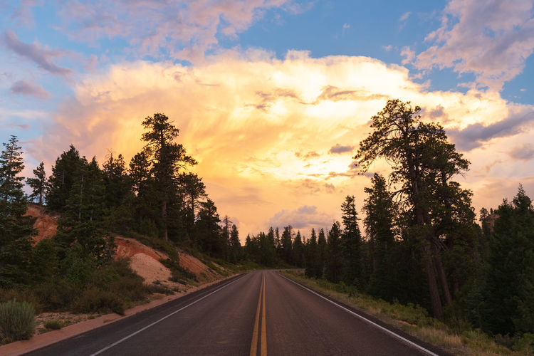 overwhelming sunset impressions Tree Sky Plant Sunset Scenics - Nature Beauty In Nature Nature Cloud - Sky Tranquility Tranquil Scene No People Non-urban Scene Silhouette Road Direction The Way Forward Transportation Diminishing Perspective Sign Country Road Country Dividing Line Bryce Canyon USA