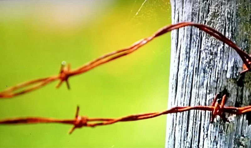 Barbed Wire Focus On Foreground Close-up Outdoors Day No People l Fresh On The EyeEm Ladyphotographerofthemonth Maximum Closeness The Week On Eyem Onerahi Whangarei New Zealand Maximum Closenes Finding New Frontiers
