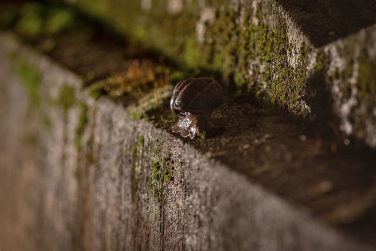 Night Lights Animal Animal Shell Animal Themes Animal Wildlife Animals In The Wild Architecture Close-up Concrete Gastropod Invertebrate Nature No People One Animal Outdoors Selective Focus Shell Snail Wall