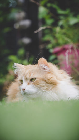 Suspicious cat