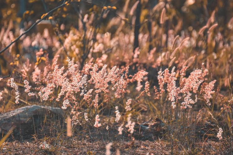 View of flowering trees in field