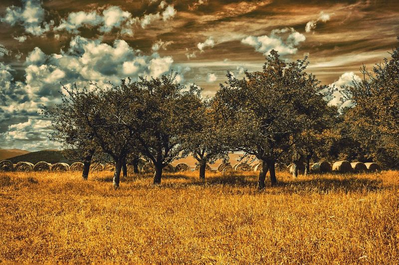 Landscape Taking Photos Enjoying Life Showcase August Home Is Where The Art Is Austria A Photo Like A Painting Landscape Photography Capture The Moment EyeEm Nature Lover Landscape_photography EyeEm Best Edits Melancholic Landscapes Colour Of Life The Week On Eyem Cloud - Sky Mystical Atmosphere Global Photographer-Collection Vienna Alps Old Tree Cornfield Fields Of Gold Straw