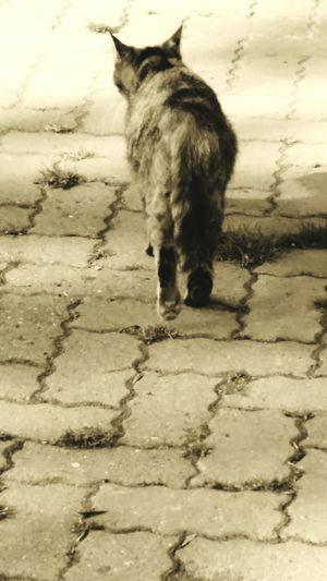 Pets Domestic Cat Animal Themes