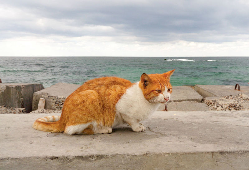 Pets Sea Sky One Animal Domestic Animals Alexandria Egypt Cloud - Sky Nature Day Water Outdoors