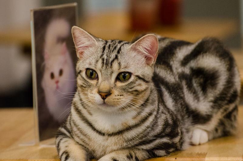 Cat Cats Cute