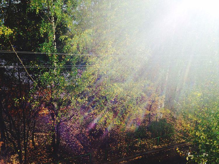Autumn Sun ☀ EyeEm Best Shots - Trees Yellow Leaves