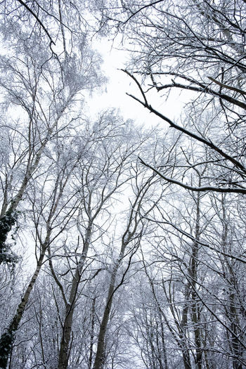 Low angle view of bare trees in winter