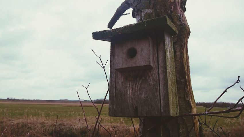 I was out for a walk with my dog and I found this cute bird house. Birdhouse Timber On A Tree Walking The Dog Outside Photography Naturelovers EyeEm Nature Lover Enjoying Life Animal Love Spring Is Coming  Today It's Cold