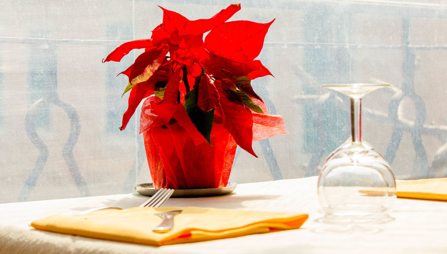 Close-up of red rose in vase on table