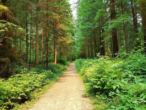 The path ahead The Week On EyeEm EyeEmNewHere