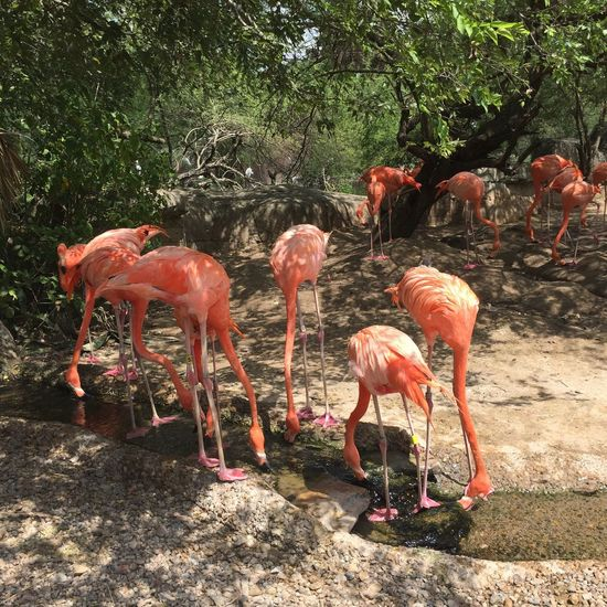 Flamingo Animal Themes Tree Nature Standing No People Outdoors Day
