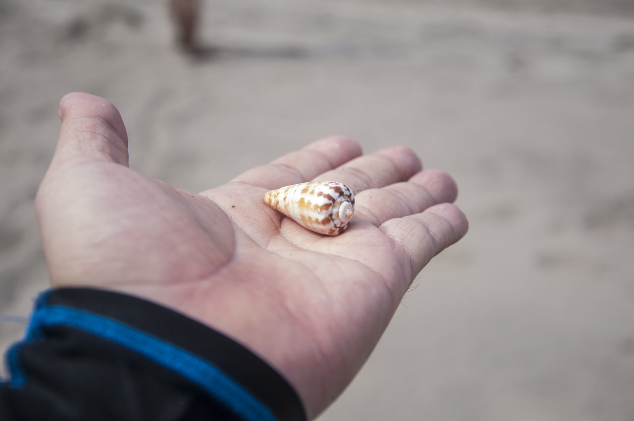 human hand, human body part, hand, one person, real people, day, holding, close-up, lifestyles, focus on foreground, body part, animal wildlife, personal perspective, one animal, leisure activity, beach, animals in the wild, human finger, finger, outdoors, marine